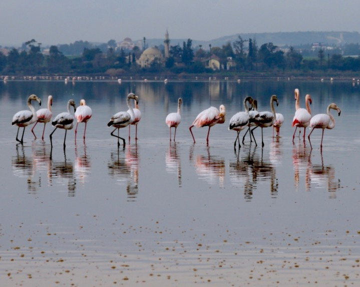 Larnaca, Cyprus: Flamingoes, Separated Friends & Halloumi