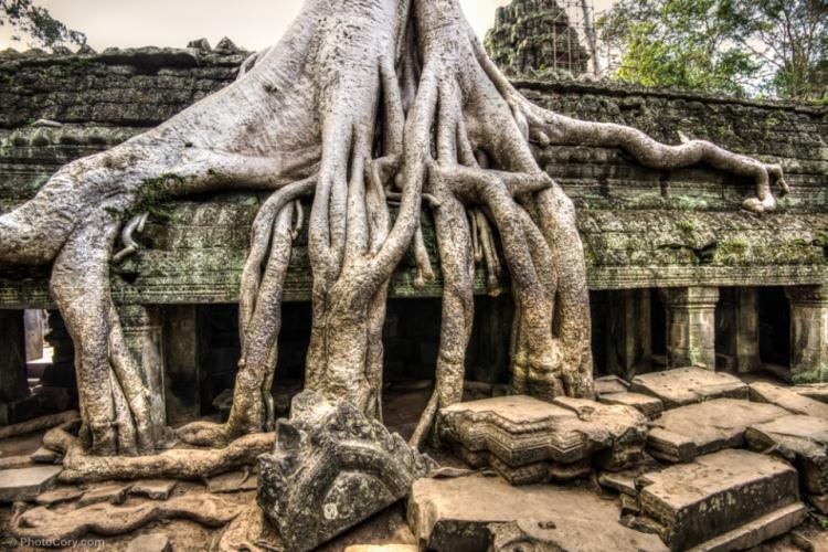 ta-prohm-roots-cambodia (1)